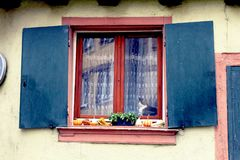 Cat at the window with Halloween decoration Stock Photo