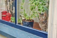 Cat in the window Royalty Free Stock Image