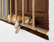 Cat on window ledge. Mediterranean village cat on window ledge Royalty Free Stock Photo