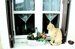 Cat. On a window ledge in Perouges Royalty Free Stock Photos