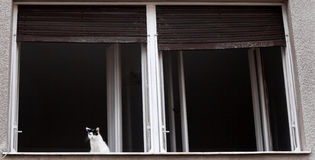 Cat on the window Royalty Free Stock Photo