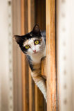 Cat in window. Cat lying on the window frame Royalty Free Stock Images