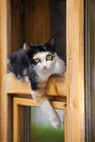 Cat in window Stock Photography