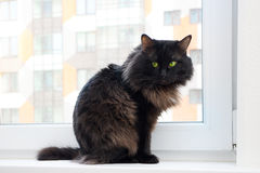 Cat on the window in a new apartment house Royalty Free Stock Images