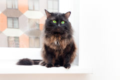 Cat on the window in a new apartment house Stock Photo