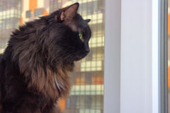 Cat on the window in a new apartment house Stock Image