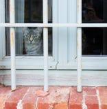 Cat in the window Stock Photo