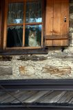 Cat in window of old house. Cat looking out of shuttered window of old house royalty free stock images