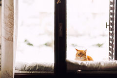 Cat at window Stock Photography