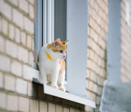 Cat on a window Royalty Free Stock Photo