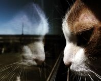 The cat at the window royalty free stock photos