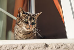 Cat by a window Royalty Free Stock Photo