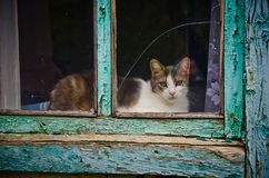 Cat at the window stock image