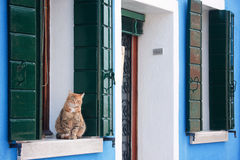 Cat On Window Sill Royalty Free Stock Photo