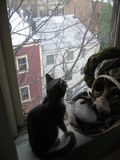 Cat on window sill. Cat sitting on a window sill looking outside royalty free stock photo