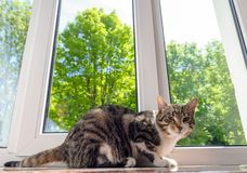 Cat on window sill Royalty Free Stock Photos