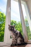 Cat on window sill Stock Images