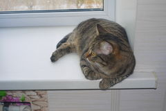 Cat on a window sill Stock Photo