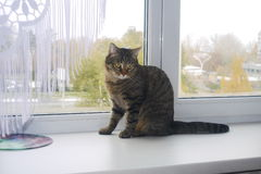 Cat on a window sill Royalty Free Stock Photography