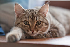 Cat on the window sill Royalty Free Stock Image