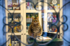 The cat in the window sits on an open book Stock Photo