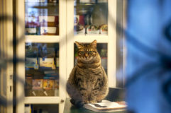 The cat in the window sits on the open book Royalty Free Stock Photos
