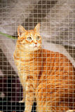 Cat in a window Royalty Free Stock Photos
