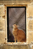 Cat in a window Stock Image