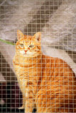 Cat in a window Royalty Free Stock Photo