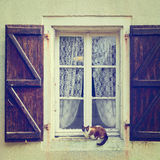 Cat on the Window Royalty Free Stock Image