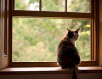 Cat in a window Royalty Free Stock Image