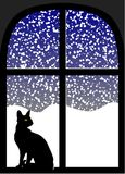Cat in window at snowy night Stock Photo
