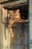 Cat on the window. Tabby cat on the window at sunset Royalty Free Stock Photography