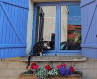 Cat sitting front of the blue window Royalty Free Stock Photography