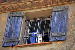 Cat at the windows Royalty Free Stock Photos