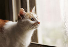 Cat in the windowsill. Cute cat in the windowsill,I do not know what it is attracted to Royalty Free Stock Images