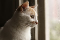 Cat in the windowsill. Cute cat in the windowsill,it was enjoying the scenery outside the window Stock Images