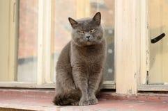 Cat on the windowsill Stock Photo