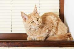 Cat on a windowsill Stock Image