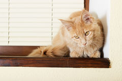 Cat on a windowsill Royalty Free Stock Image