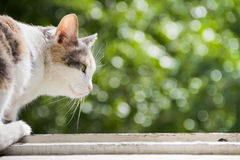 The cat on the windowsill against the green bokeh Royalty Free Stock Photos