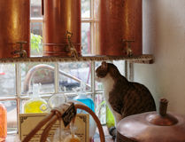 Cat on a windowsill in Ancient perfume laboratory in the village Stock Image