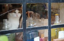 Cat on a windowsill in Ancient perfume laboratory in the village