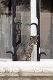 Cat on windowsill Stock Photo