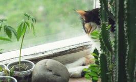 Cat on windowsill, hemp plant and cactus stock photos