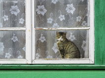 Cat on windowsill, Lithuania Royalty Free Stock Photo