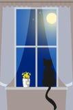 Cat on windowsill Stock Images