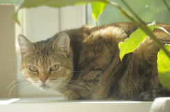 Cat on a windowsill Stock Photos