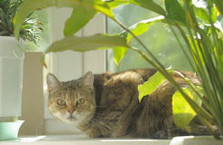 Cat on a windowsill Stock Photography