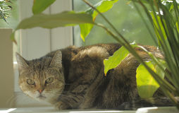 Cat on a windowsill Stock Photo